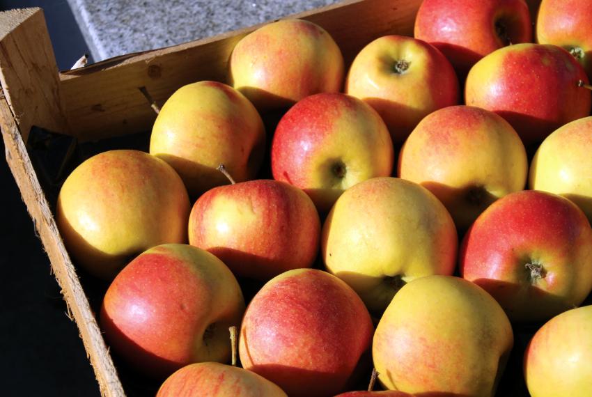 Apfel Auf Englisch